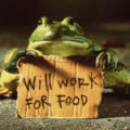 frog-will-work-for-food
