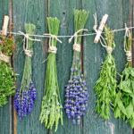 Трава у дома: Самые полезные растения и особенности их заготовки