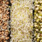 Обман веществ с Максом Погорелым: пророщенные зерна и бобовые — тихие убийцы поджелудочной